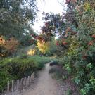 Image of the low-water, Mary Wattis Brown Garden of California Native Plants