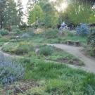 Image of the original California lawn demonstration garden in the UC Davis Arboretum's Mary Wattis Brown Garden of California native plants.
