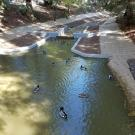 Arboretum Waterway with ducks