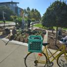 Image of staff and volunteers planting perennials in the UC Davis Good Life Garden.