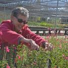 Volunteer Maintains Arboretum Plants.