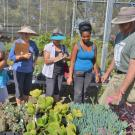 Nursery staff encourage gardeners to consider purchasing plants outside their bloom season to ensure a landscape alive with color and environmentally important pollinators. Here UC Davis Arboretum Teaching Nursery Manger Taylor Lewis trains volunteers about the many species of plants grown in the campus's one-acre nursery.