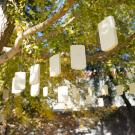 Image of an art installation entitled Addiction, 2019, featuring dozens of fake, plaster cell phones hanging from a popular ginkgo tree in the UC Davis Arboretum's East Asian Collection.