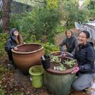 Image of Learning by Leading Habitat Horticulture interns planting pollinator-attracting containers. Their goal is to educate the public about how the smallest gardens can support pollinators.