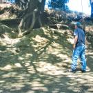 Image of Andrew Fulks, assistant director UC Davis Arboretum and Public Garden, concerned about tree health and vandalism, assesses erosion damage caused by surge in visitors who add ropes, swings and ladders to trees on research land.