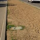 Image of La Rue Road median with weeds and no flowers