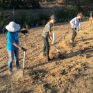 Students on the UC Davis Arboretum and Public Garden's Learning by Leading Habitat Restoration team work to restore a previously barren patch of land filled with plants that surround their man-made water way.