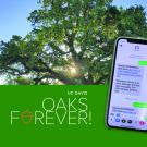 Image of oak tree and mobile phone.