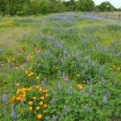 Image of native plant meadow and post and cable fencing