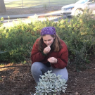 UC Davis Arboretum and PUblic Garden Learning by Leading Sustainable Horticulture intern examining plants.