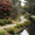 Image of the Australia and New Zealand Collection in the UC Davis Arboretum.