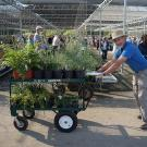 Spring Plant Sale CLEARANCE