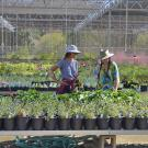 Image of shoppers in the UC Davis Arboretum Teaching Nursery