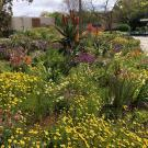 Image of the Biological Orchard Garden in spring on the UC Davis campus.