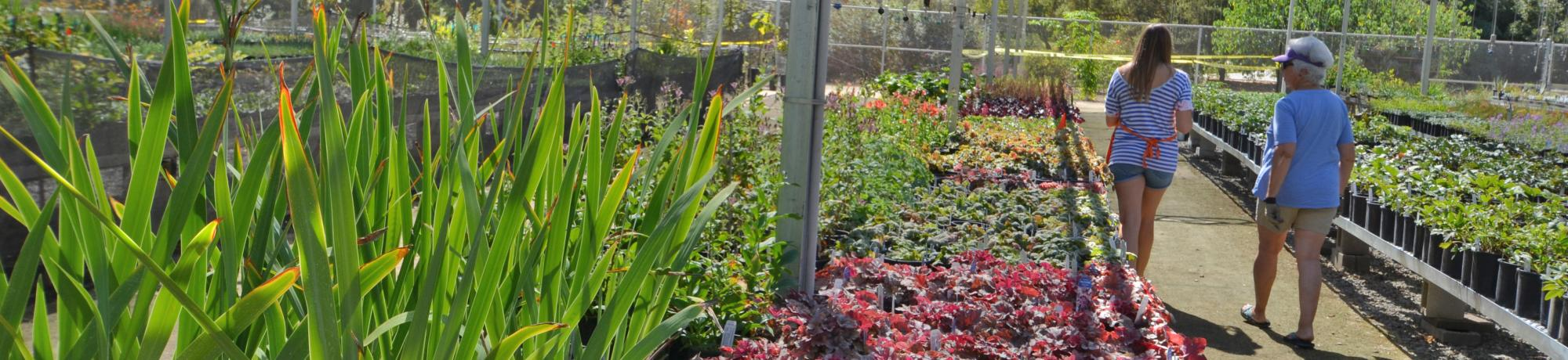 Image of UC Davis Arboretum Teaching Nursery.