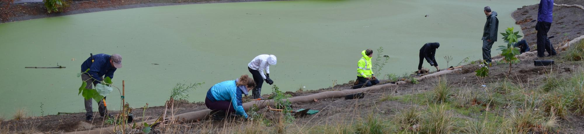 Image of UC Davis Learning by Leading students restoring a portion of the banks along the Arboretum Waterway.