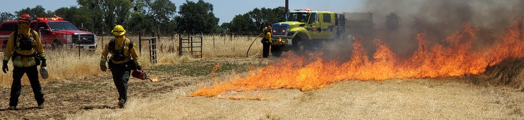 Firefighters participating in wildland fire training