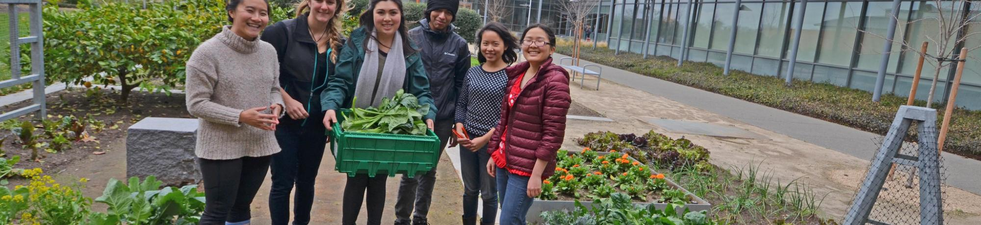 Image of students preparing to donate their Good Life Garden harvest to The Pantry.